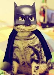 10 creative cat costumes for the purrrfect