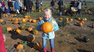 Pumpkin Picking Long Island Ny by Pumpkin Picking 2015 At Beluncle Farm Hoo In Medway Youtube