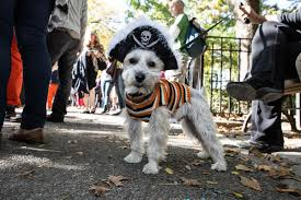 Tompkins Square Halloween Dog Parade by Tompkins Square Park Halloween Dog Parade 2012