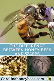 290 Best Bees Images On Pinterest | Backyard Beekeeping, Bee ... How To Keep Bees A Beginners Guide Bkeeping Deter And Wasps And Identify Which Is Family 2367 Best Homestead Animals Images On Pinterest Poultry Raising Best Bee Hives Images Photo Wonderful To Away Become A Backyard Bkeeper Fixcom Why Your Child Needs Working Bee Urban Honey Back Yard Made Simple Image On Marvellous 301 Keeping Bees 794 The Complete 7step Chickens In Plants That Simplemost