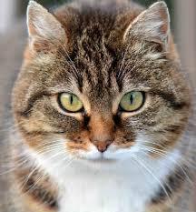 my cat has dandruff cat dandruff your cat s flaky itchy skin