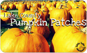 Southern Illinois Pumpkin Patches by Lake County Pumpkin Patches