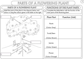 Life Cycle Of A Pumpkin Seed Worksheet by Year 3 Science Parts Of A Plant Worksheet By Beckystoke