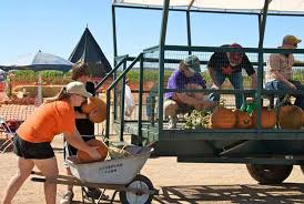 Kc Pumpkin Patch Groupon by Visiting Pumpkin Patches In Kansas City