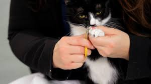 how to cut a cats nails how to clip your cat s nails cat care