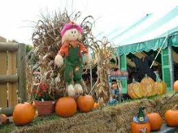 Pumpkin Patch Prince Frederick Md by Best Pumpkin Patches In Northern Virginia Agent Appraiser Realty