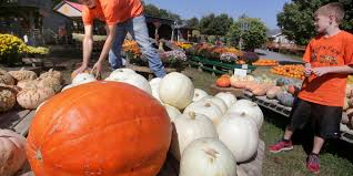 Pumpkin Patch Nashville Area by Mazes And More Will Keep You Busy On The Farm