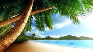 Wallpaper Palm Trees Landscape Beach With Sea California Hd