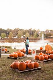 Pumpkin Patch Louisiana by Pumpkin Patch Presented By Jlsb Provenance Realty Group