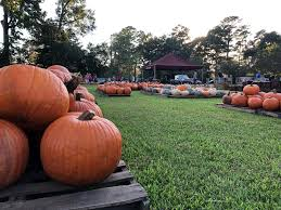 Pumpkin Patch College Station by The Great Pumpkin Patch Is Back At First United Methodist Church