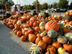 Columbus Pumpkin Patch by A Taste Of Hungary Festival U2013 Columbus Ohio Pinterest Ohio