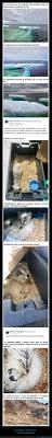 Schleich Figura Oso Polar 14659 Amazones Juguetes Y Juegos
