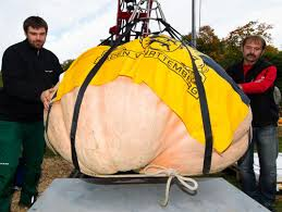 Fertilizer Requirements For Pumpkins by The Secret To Growing The World U0027s Largest Pumpkin Science