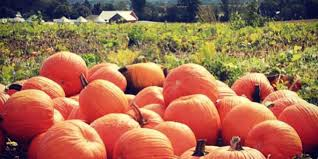 Napa Pumpkin Patch Hours by 25 Pumpkin Patches In Alabama You Need To Visit This Fall