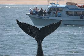 Whale Watching Coupons Monterey Ca - Kyoto Milwaukee Coupon Gap Online Coupon Code 2019 Coupon Zooplus Italia Intertional Jock Vca Becker Animal Hospital 1 Grabfood Promo Codes Deals For Sarpinos Pizza Thai Food Pizzeria Coupons The Local Lineup Adidas Gazelle Promo Christa Coupons Dollar General Chinatown Mchenry Buy Mi Paste Snickers Discount Adam And Eve Free Whale Watching Monterey Ca Kyoto Milwaukee Datebox Kfc Singapore Space Play Tent Discount Card In Iceland Csea Discounts Ny