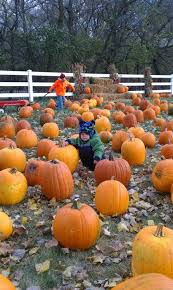 Fargo Moorhead Pumpkin Patches by Buffalo River Pumpkin Patch Glyndon Mn