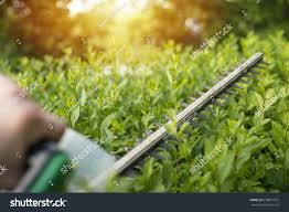100 Www.home And Garden Home Concept Hedge Trimmer Action Stock Photo Edit