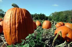 Old Auburn Pumpkin Patch by 10 Best Pumpkin Patches In Alabama