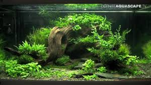 Wonderful Inspiration Aquascape Aquarium Charming Decoration