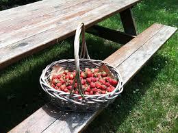 Pumpkin Farms Toms River Nj by Strawberry Season Tips From Author Rachel Weston Jersey Bites