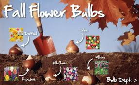 farmer seeds plants vegetable herb flower bulbs