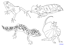 Pin Drawn Reptile Line Drawing 5