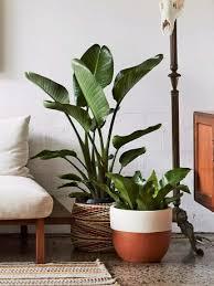 pflegeleichte zimmerpflanzen tipps und pflege otto