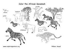 African Animals Habitat Biome Savanna Colouring Page Grassland