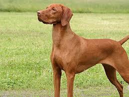 Non Shedding Dogs Small To Medium by Medium U0026 Medium Sized Dog Breeds Medium Dog List
