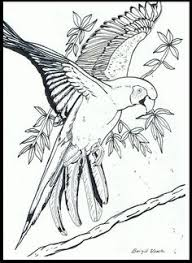 59 Free Jungle Bird Coloring Pages For Adults