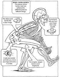 Bone Joints Bones Coloring Free Names Facts Humanbody Anatomy