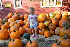 Wenninghoff Pumpkin Patch Omaha by 22 Local Pumpkin Patches Orchards To Check Out For Family