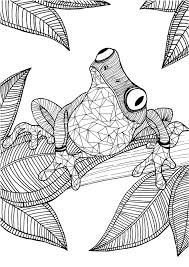 Frog Adult Colouring Page In Sheets