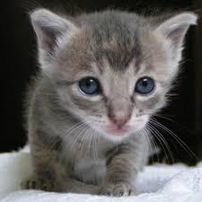 kitty cat kitty cat fluffythecat