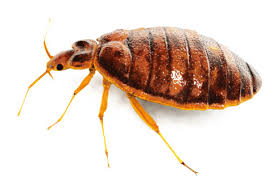 Yakima Bed Bug Control Kittitas Exterminators