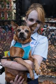 Tompkins Square Park Halloween Dog Parade 2016 by Photos The Best Costumes At Tompkins Square Park U0027s Halloween Dog