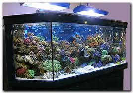accessoire d aquarium pas cher