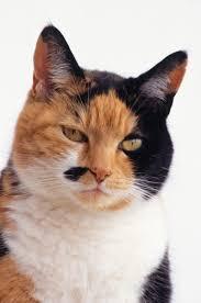 my cat has dandruff dandruff wipes for cats pets