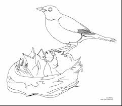 Amazing Robin Bird Coloring Pages Printable With Birds And Flying