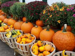 Pumpkin Farms In Nj by 10 Best Spots For Apple And Pumpkin Picking Near Nyc