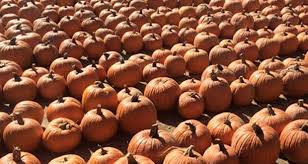Santa Clarita Pumpkin Patch Festival by The Lombardi Ranch Fall Festival Is Coming To A Close