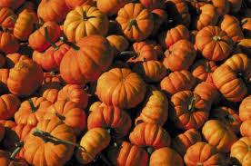 Varieties Of Pumpkins by Pumpkin Patch