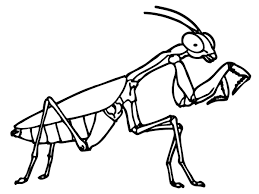 High Quality Free Praying Mantis Insect Coloring Books Printable For Kids