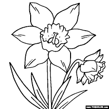 Daffodil Flower Online Coloring Page