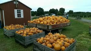 Apple Pumpkin Picking Syracuse Ny by Jet Black Syracuse 129 Walton Street Syracuse Ny