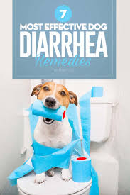 Organic Pumpkin For Dogs Diarrhea by Top 7 Best Dog Diarrhea Remedies In 2017