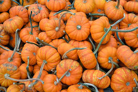 Pumpkin Patch Katy Tx by The Outlaw Gardener A Pumpkin Patch Visit Spooner Farms Harvest