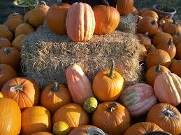 Closest Pumpkin Patch To Marietta Ga by 128 Best It U0027s Fall Y U0027all Images On Pinterest Georgia Atlanta