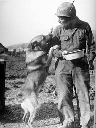 Most Decorated Us Soldiers In History by The Dogs Of War The U S Army U0027s Use Of Canines In Wwii The