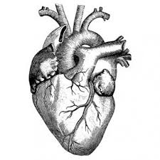 Real Heart Actual Outline Tattoo Design Images On Clipart